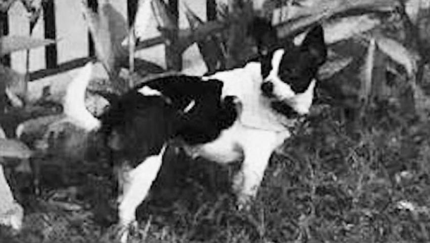 Kayıp köpeğini bulana 1 milyon 700 bin liralık evini verecek