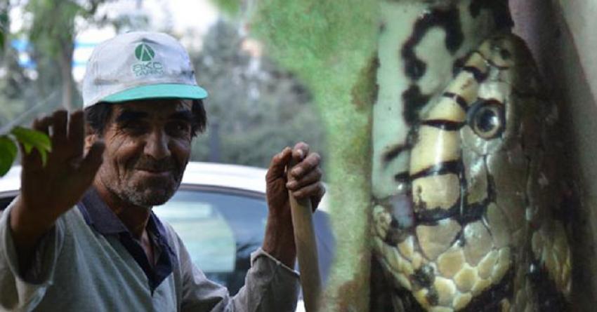 Kurbağayı yılanın ağzından kürekle kurtardı!