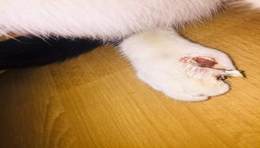 Yaralı kedi için seferber oldular