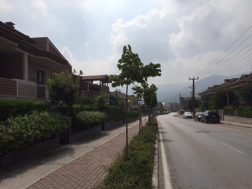 Bursa'nın yeni Bademlisi Çamlıca (ÖZEL HABER)