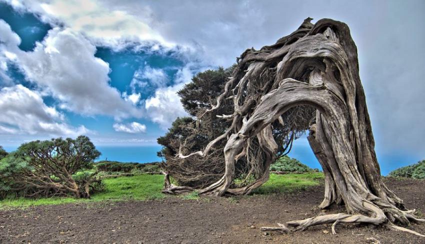 Dünyanın en tuhaf ağaçları!