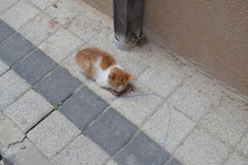 Yaralı kediye duyarlı vatandaşlar sahip çıktı