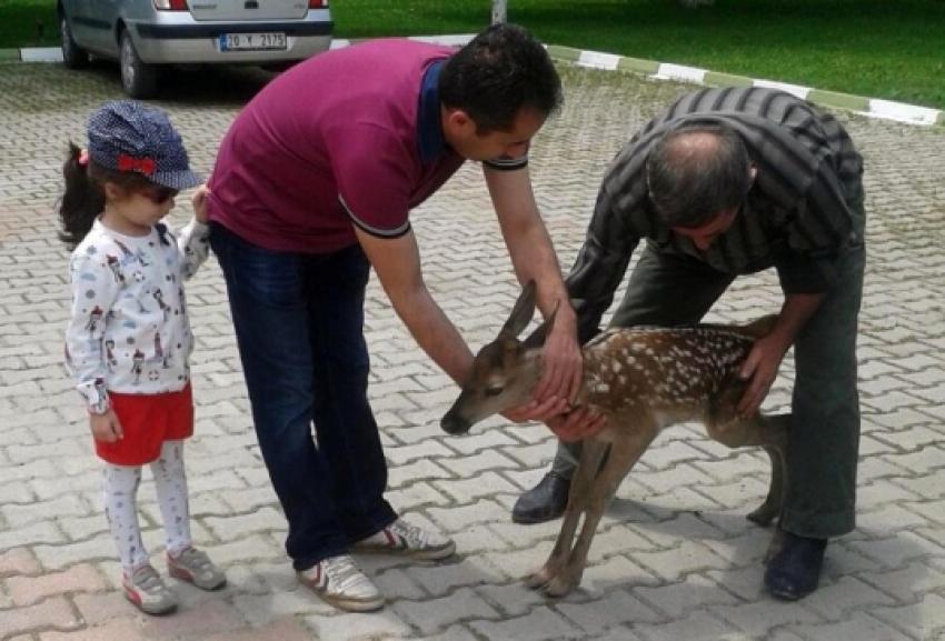 10 günlük geyik yavrusuna vatandaş sahip çıktı