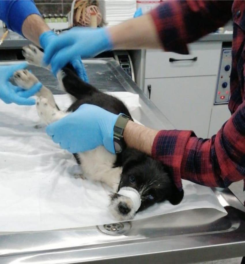 Aracın çarptığı köpeğe sahip çıktı, sürücüyü bulup tedavi masrafını ödetti