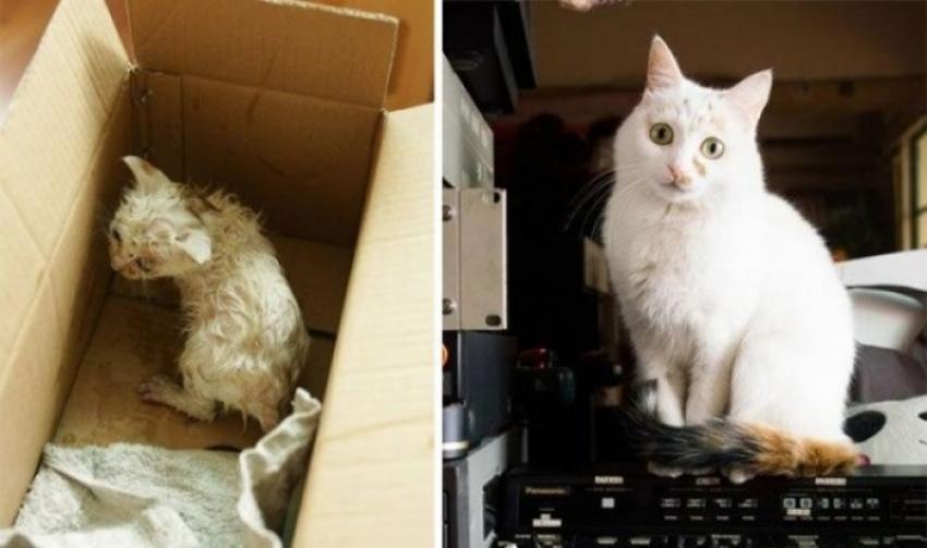 Sevgi ile hayatı değişen 14 sokak kedisi