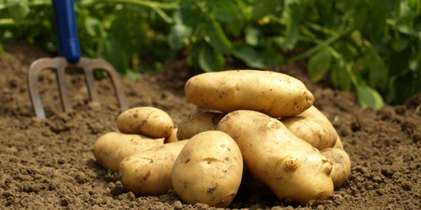 Patates fiyatları düşmeye başladı