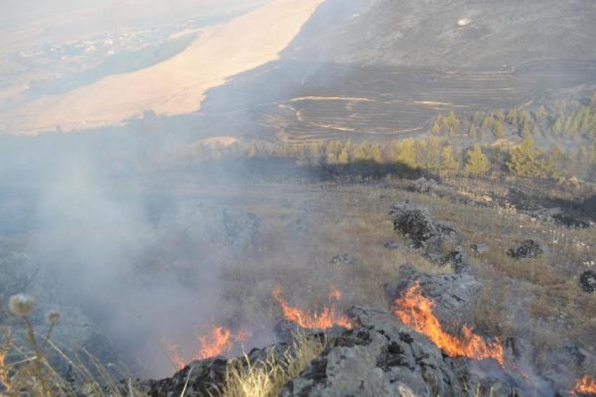 Karga 500 dönüm araziyi yaktı