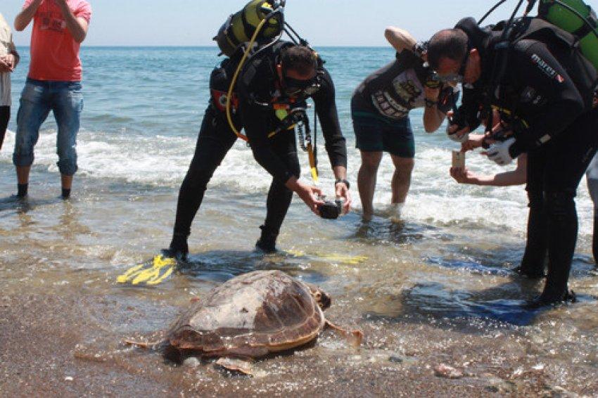 Deniz kaplumbağalarına uydu cihazı