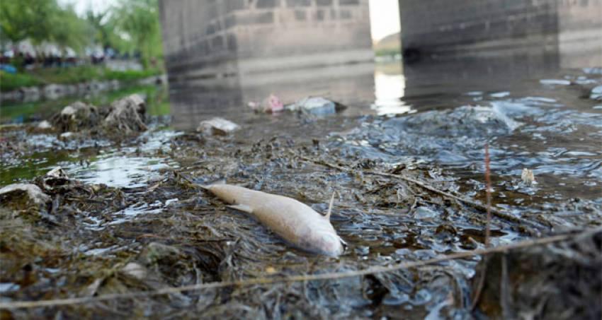 Toplu balık ölümleri tedirgin ediyor