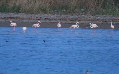 Flamingoların fırtına molası