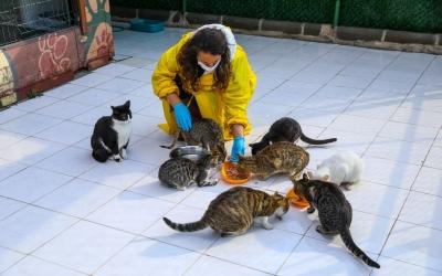Engelli kedilere 5 yıldızlı hizmet
