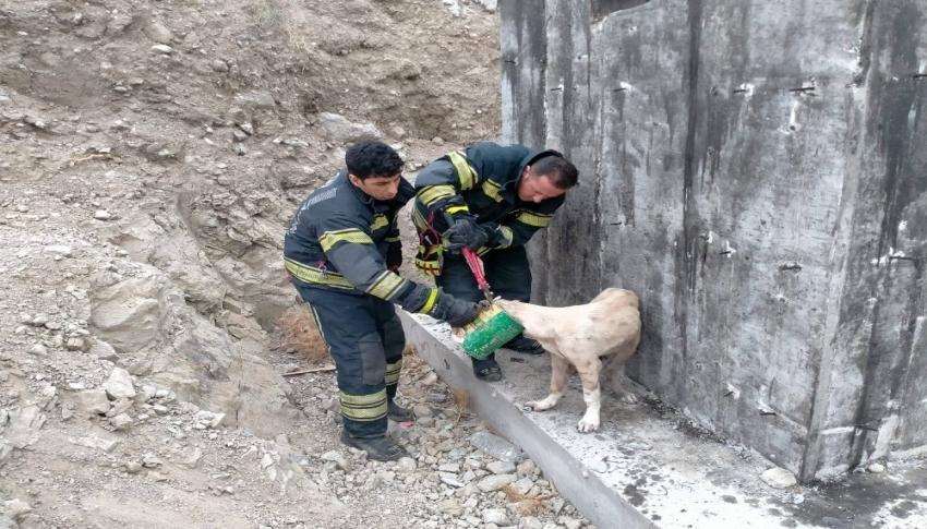 Konserve kutusuna kafası sıkışan köpek kurtarıldı