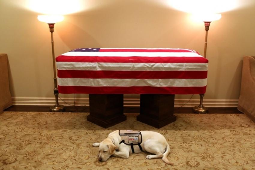 Köpeği eski ABD Başkanı Bush için yas tutuyor