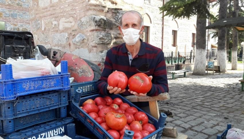 Bursa'da rekor kıran domates