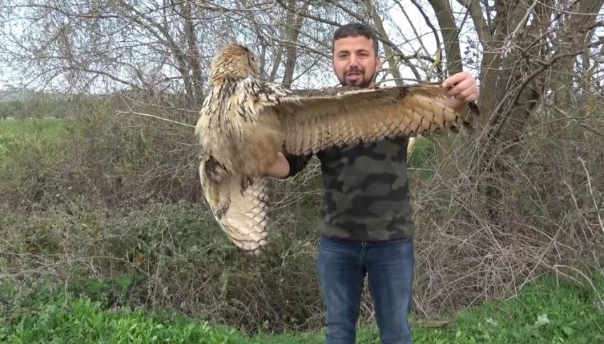 Bursa nadir görülen yırtıcı kuşu ölümden kurtardı