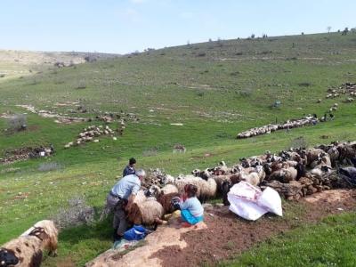 Koyun kuduz çıktı, hayvanların köye giriş çıkışları yasaklandı