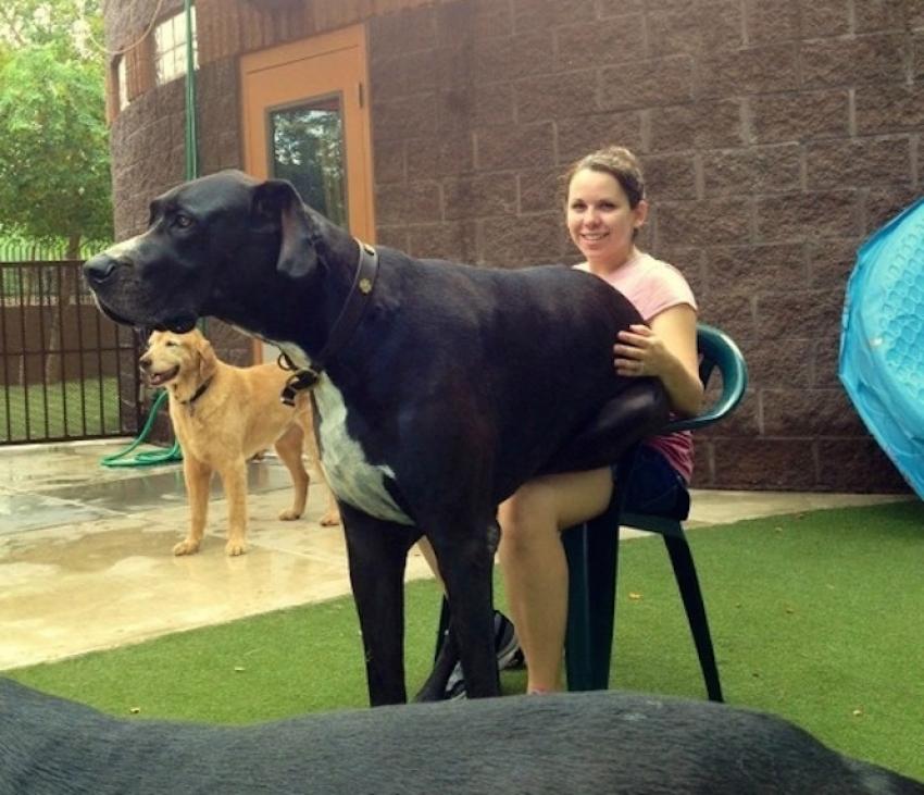 Sahiplerinden bile büyük 15 köpek!