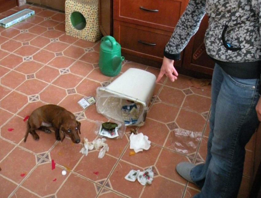 Pişmanlığı yüzünden okunan 15 köpek!