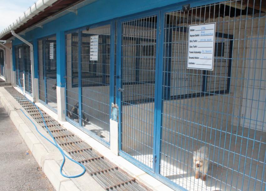 Bursa'da hayvan otelinde yer kalmadı