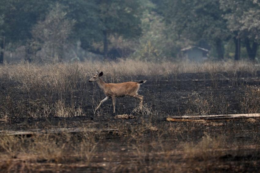 California'daki yangın Eylül'e kadar sürebilir