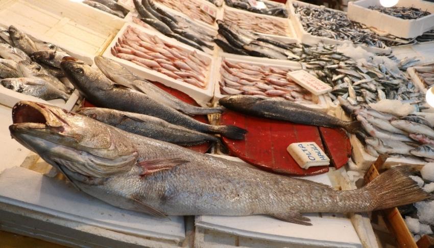 45 kilogramlık halili balığı yakalandı