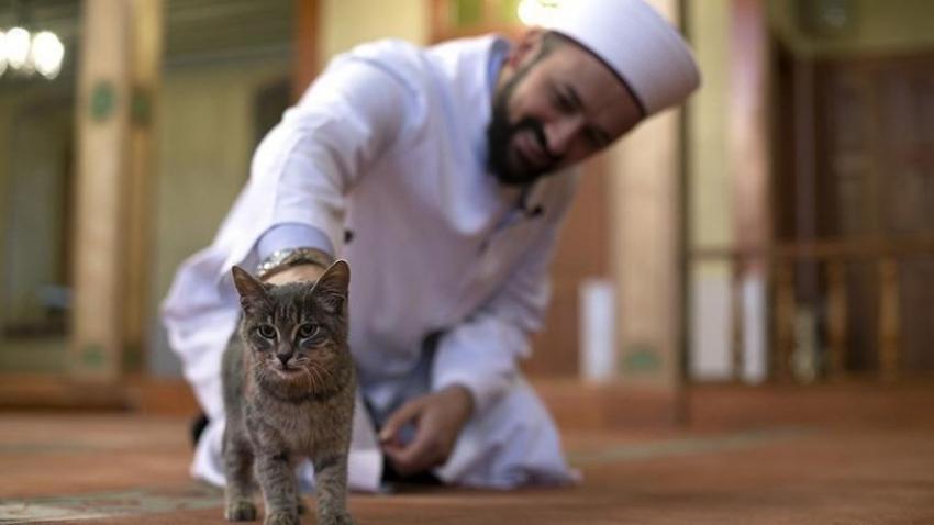 İmamlara kedi önerisi
