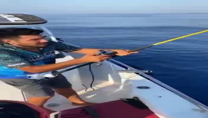 Oltaya takılan köpek balığı ağzındaki kanca çıkartılarak serbest bırakıldı
