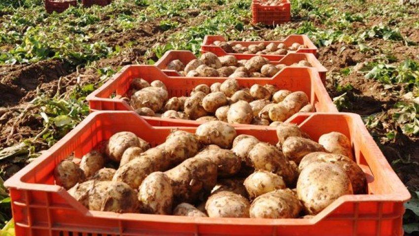 Patates fiyatlarını düşürecek haber