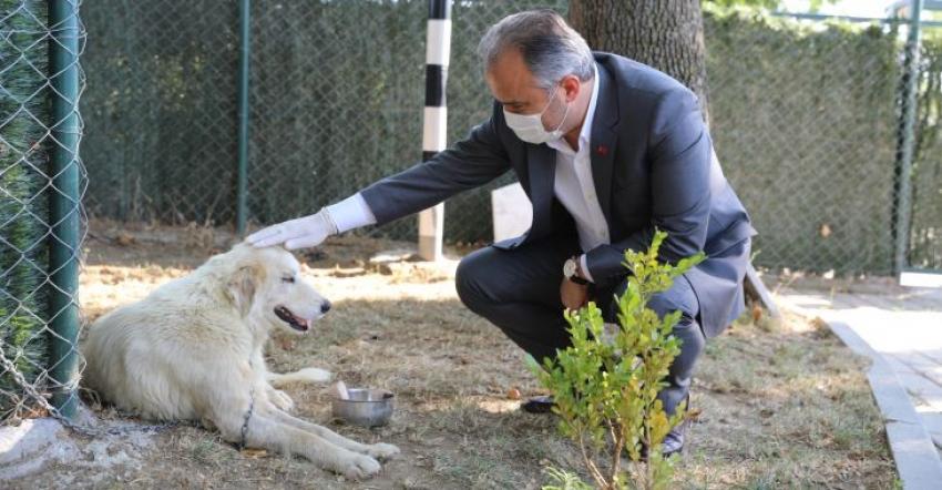 Bursa Büyükşehir'den can dostlara şefkat eli