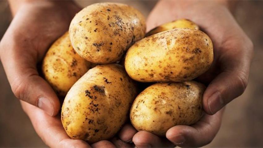 Patates fiyatında önemli düşüş