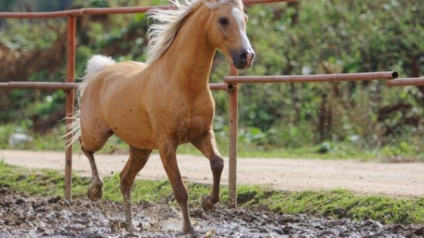 At skandalında inanılmaz gerçekler