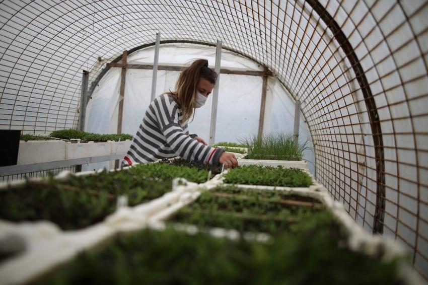 Bursa'da yerel tohum seferberliği