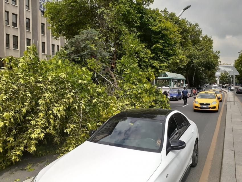 Başkent'te üzerine ağaç devrilen vatandaş yaralandı