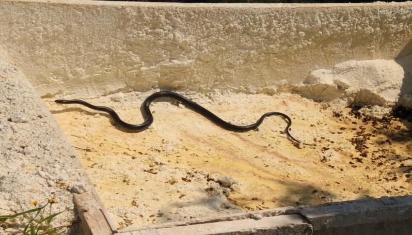 Kuşadası'nda görülen yılanlarla ilgili uzmanlar uyardı!