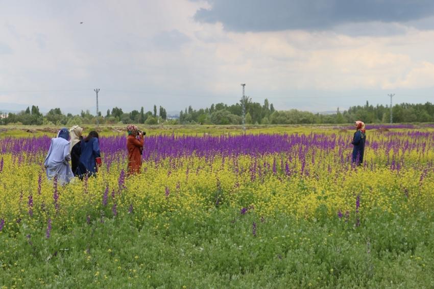 Bozkır'da açan çiçekler Sivas'a renk kattı