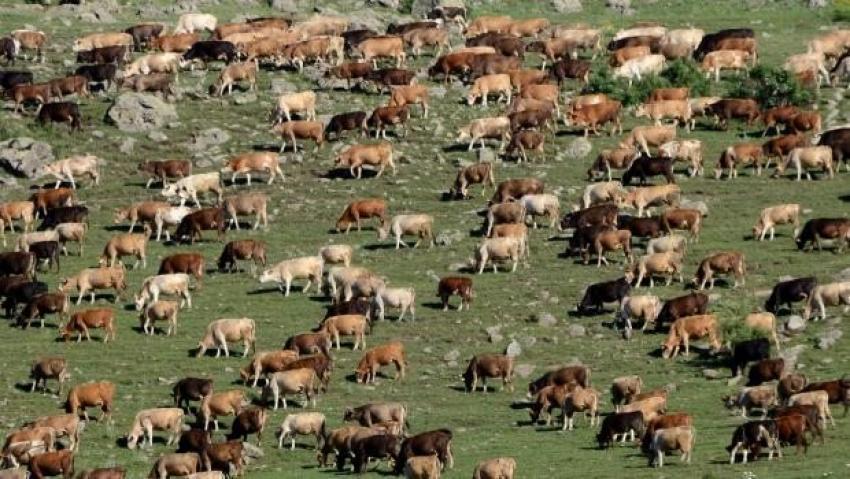 Süt üreticilerinden kritik uyarı