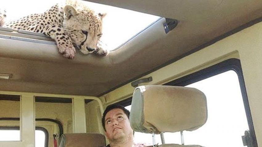 Çitayla burun buruna
