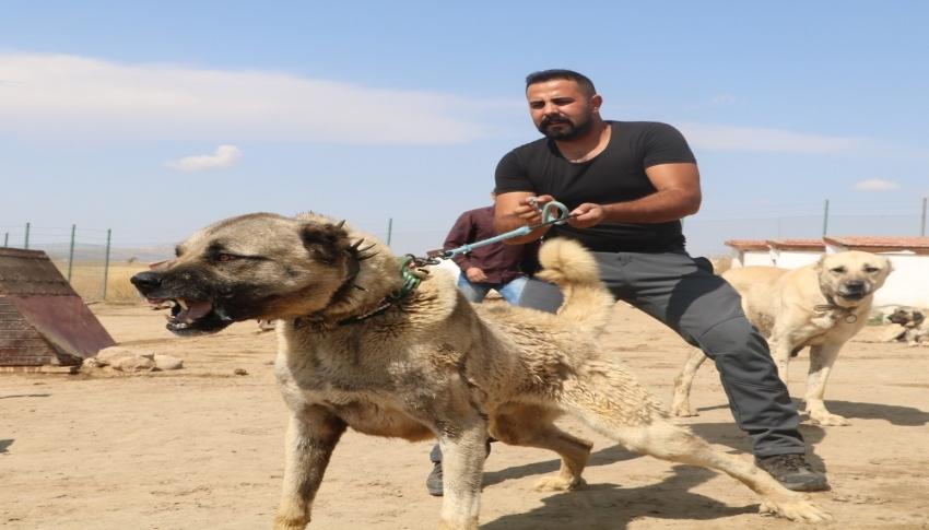 PÖH'ün yanında görev alacak kangallar, vatan görevi için hazır