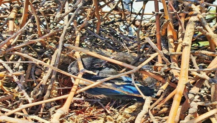 Bursa'da yuvasından düşen yavru kuş için seferber oldu