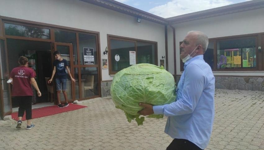 Bursa'daki dev lahana görenleri şaşırttı