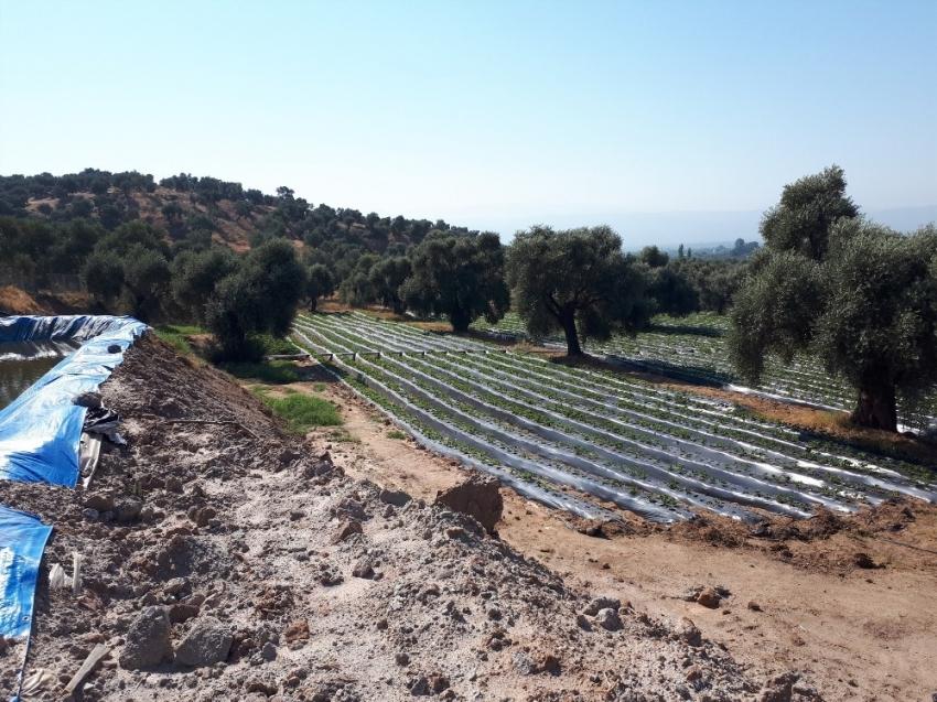 Aydınlı çiftçilere 791 bin TL'lik destek
