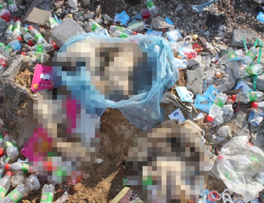 Çöplükte yavru köpeklerin ölü bedenleri bulundu