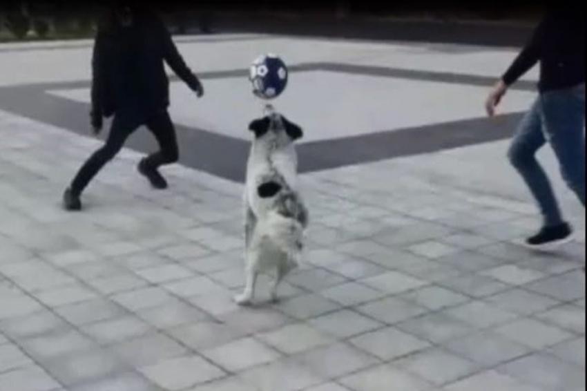 Futbolcu köpeği gören telefona sarıldı