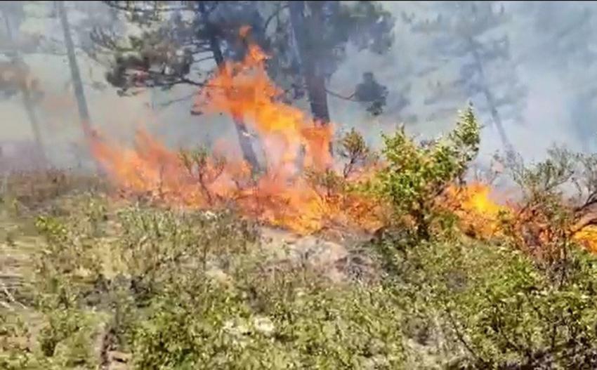 Alaçam Dağları'nda orman yangını