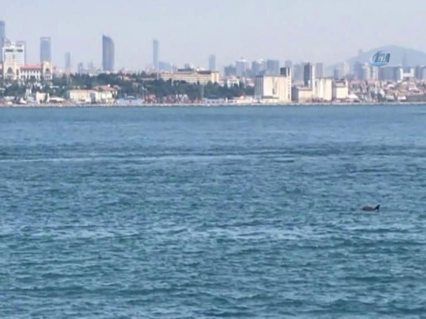 İstanbul Boğazı'nda yunuslardan görsel şölen