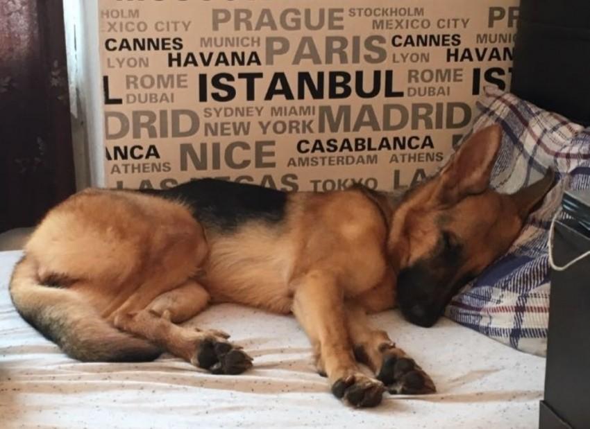 Köpeğini getirene 5 bin lira verecek