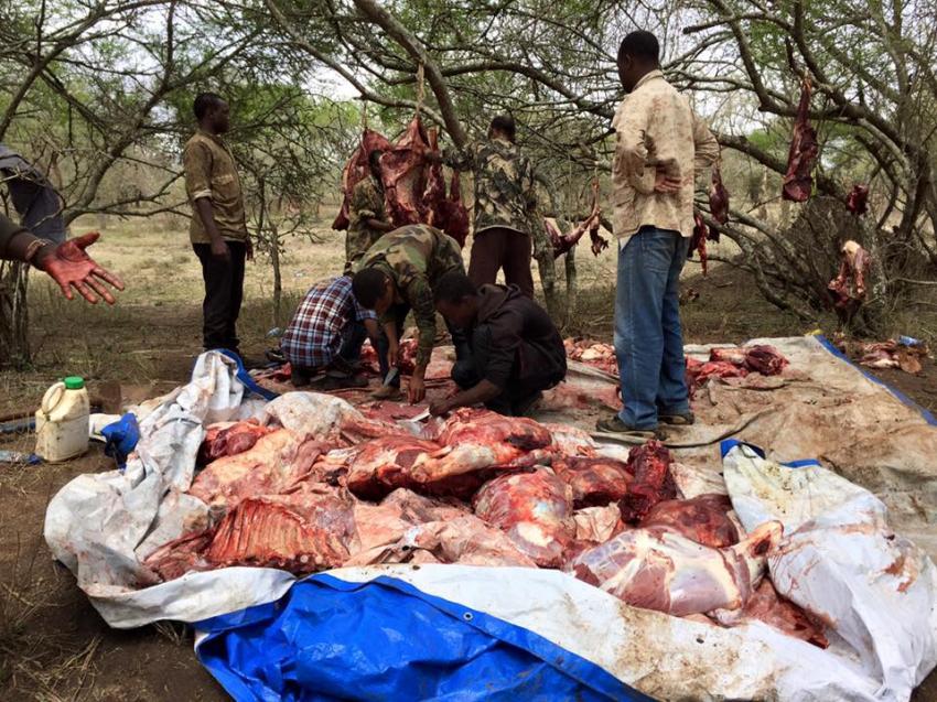 Bursalı avcı işadamı Afrika'yı kuruttu!