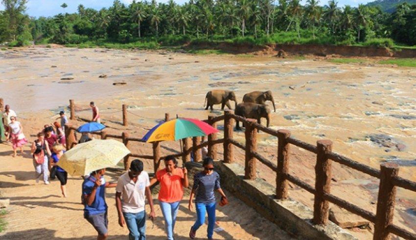 """Dünyanın ilk ve tek """"fil yetimhanesi"""""""