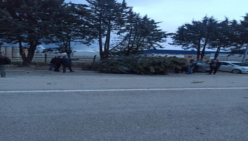 Bursa'da otomobilin üzerine ağaç devrildi