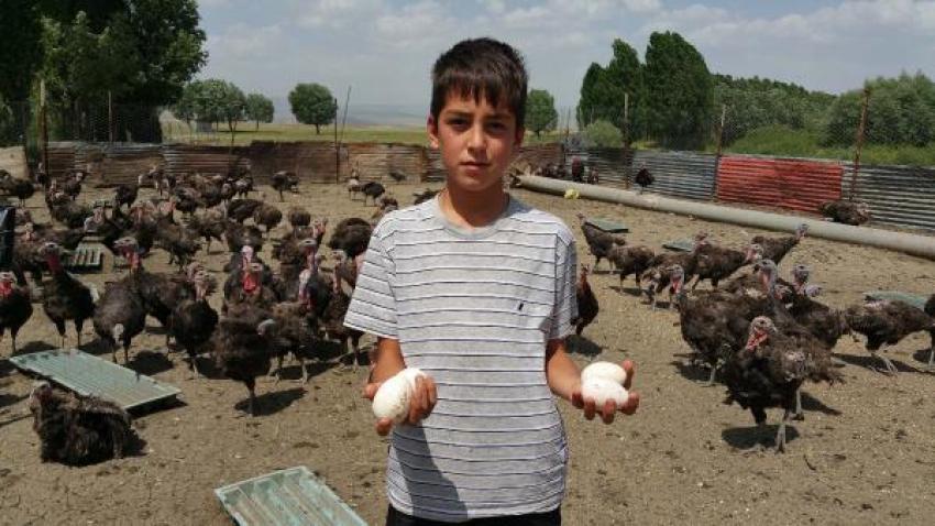Organik hindi yumurtası 75 kuruş